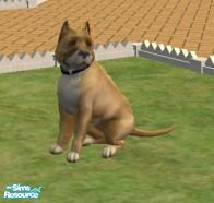 Sims 2 — Pit Bull Terrier by brittie — This is MY version of a Pit Bull Terrier.. Enjoy!