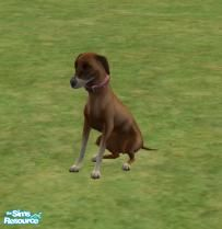 Sims 2 — Azawakh by brittie — This is an azawakh. A breed not known to many. Enjoy!