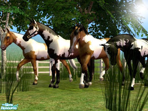 Sims 2 — Basic Paint Horse Set by xtinabobina — FINALLY, I\'m getting around to uploading these. Here are my FOUR free