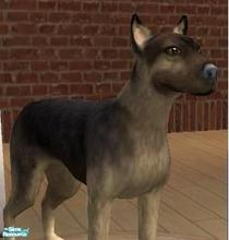 Sims 2 — MixBreed Wolf by dannybond1990 — Not a dog, no longer a wolf. This dog has the somewhat markings and makings of