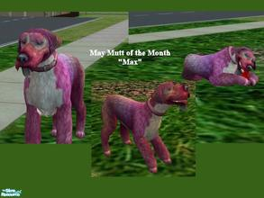 Sims 2 — Mutts of the Month: May by Small Town Sim — May's Mutt of the Month is Max. He is a bundle of energy. With his