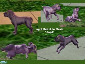 Sims 2 — Mutts of the Month: April by Small Town Sim — Meet April's Mutt, Angel! She is an Angel and more! Her purple