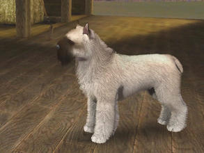 Sims 3 — Fawn Bouvier des Flandres by Mayet514 by mayet514 — This is a very rare fawn colored Bouvier des Flandres. Most