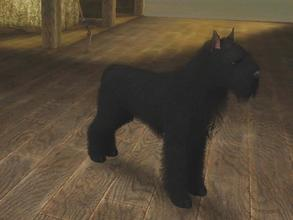 Sims 3 — Black Bouvier des Flandres by Mayet514 by mayet514 — Bouvier des Flandres are Belgian herding dogs but are also
