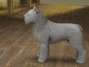 Sims 3 — Gray Bouvier des Flandres by Mayet514 by mayet514 — Bouvier des Flandres are Belgian herding dogs but are also