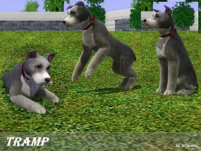 Sims 3 — Tramp by Wimmie — Hi, this is Tramp. Tramp is a great dog and he's the best friend of Lady. Thanks for