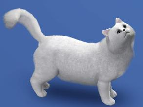 Sims 3 — Persian by LizardDaughter — White Persian Cat