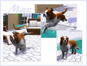 Sims 3 — Max by philo — Max is a little Saint-Bernard, do you have a home for him ?