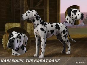 Sims 3 — Harlequin the Great Dane by Wimmie — Hi, this is Harlequin, a Great Dane. In my game he lives on a stud farm and