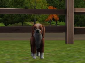 Sims 3 — Icicle by Ben72006 — She is every simliar to our new pup. She is our new pup and she is friendly, Playful and