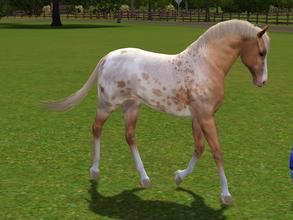 Sims 3 — Tavani by Tazm1n2 — Palomino Appy By Tazm1n. Female Horse with unique markings. Made by request