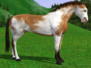 Sims 3 — Buckskin Paint  by Tazm1n2 — Created by request. Can also be found on the Exchange here
