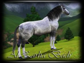 Sims 3 — Al Zahra Badr by annie_over — Adult Female Dapple Grey Andalusian Agile Genius Playful