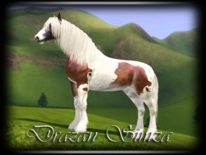 Sims 3 — Drazan Simza by annie_over — Adult Male Gypsy Vanner Stallion Chestnut And White Tobiano Markings Brave Fast