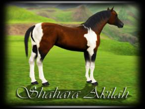 Sims 3 — Shahara Akilah by annie_over — Adult Chocolate Bay And White Tobiano Pintabian Mare Agile Fast Genius
