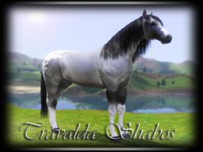 Sims 3 — Travalda Shabos by annie_over — Adult Blue Roan Appaloosa Stallion Fast Genius Playful