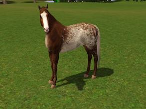 Sims 3 — Sweet  by Tazm1n2 — Created for a fellow simmer by request, from a real horse as inspiration. Sims 3,
