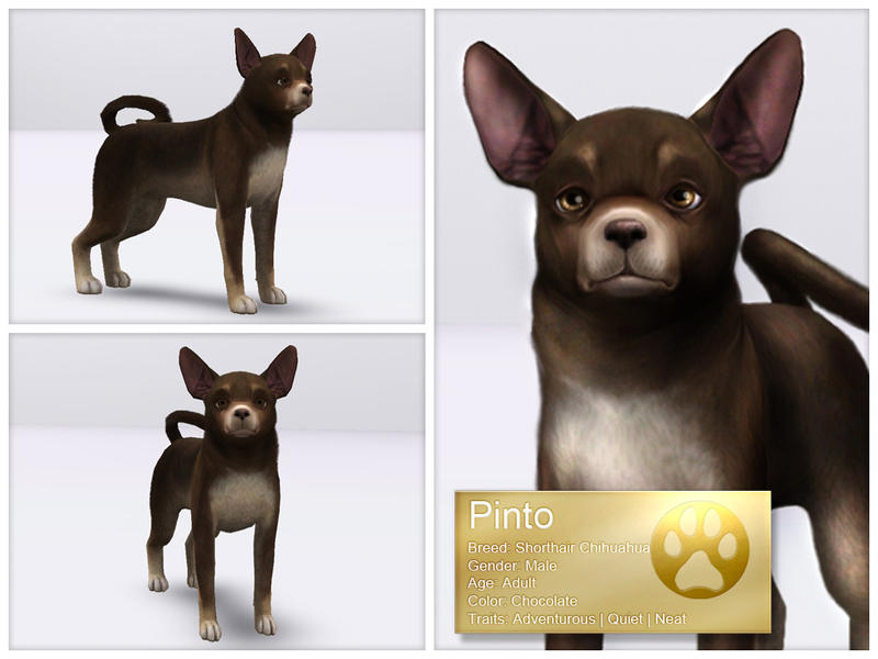 Sims  Cats And Dogs Stuff