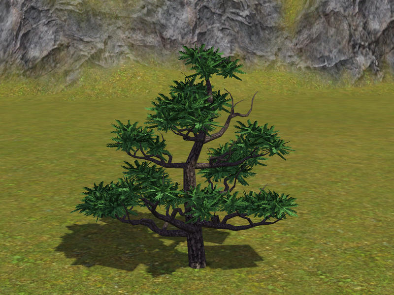 Sim man123 39 s small japanese pine tree for Small japanese tree