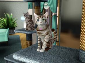 Sims 3 — Texas Ocicat S3 by spitzmagic — This is my Sims 3 version of my Texas Ocicat that I made for Sims 2. She's a