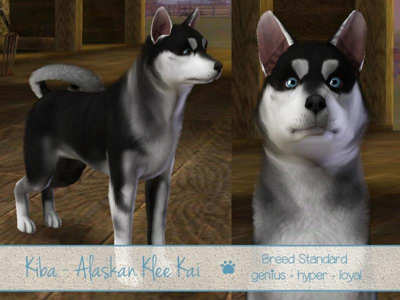Sims  Pets How To Make Your Dog Loyal