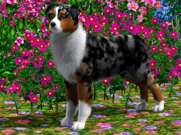 Sims  Pets Dog Breeds Download