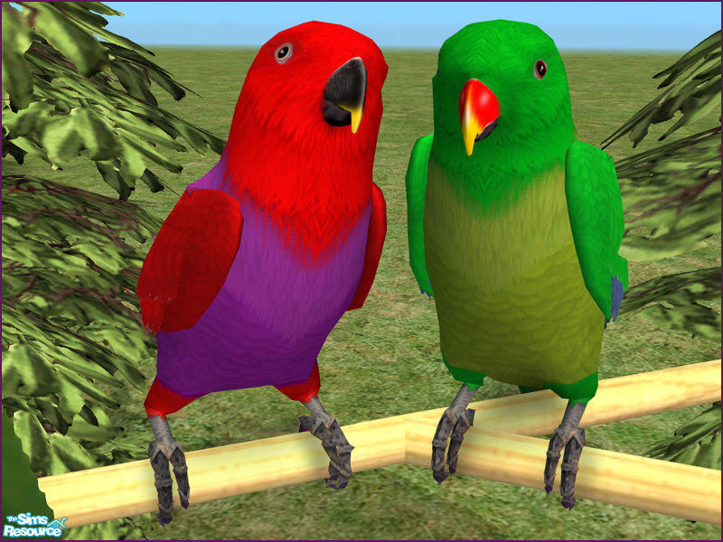 LadyMinion's Eclectus Parrots - Male & Female