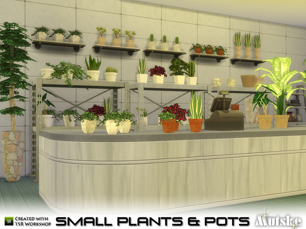 Small Plant and Pots by Mutske