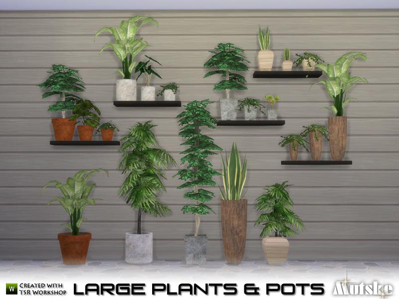 Big Pots Indoor Plants: Mutske's Large Plant And Pots
