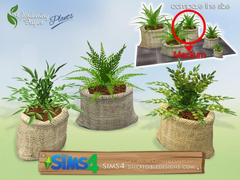 Foyer Plants : Simcredible s gardening foyer plants plant mid