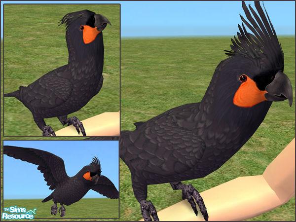 Ladyminion S Palm Cockatoo