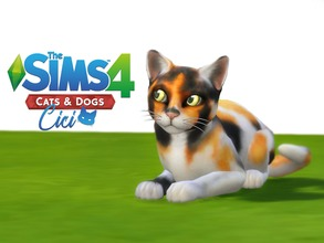 Sims 4 — Cat - Cici by Vikkei — Cici - Female - Tuxedo - Lazy, Aloof She thinks she's smarter than she is, which can be a