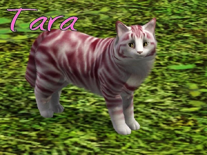 Tara Cat