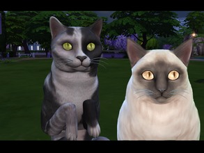 Sims 4 — Realistic Cat Eyes by Rimisa2 — Realistic cat eyes in 18 different colors.