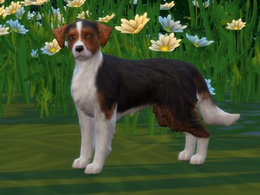 Sims 4 — Sarah by Darcy182 — I tried to create my dog in real life, and here she is! Sarah is a small dog who's playful,