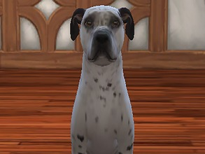 Sims 4 — Petey by Kidakane — Meet Petey! He's a very loving boy currently up for adoption at the 4 Life Animal Rescue in