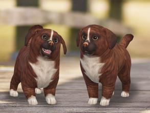Sims 4 — Cinnamon  by Pinkzombiecupcakes — Little Cinnamon is looking for a loving home and a best friend for life,she is