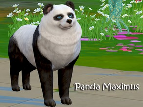 Sims 4 —  Panda Maximus by Sims_House — Panda Maximus sim for the game sims 4. Friendly, intelligent, likes to sleep. Of