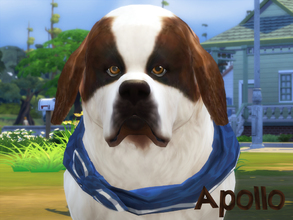 Sims 4 — Apollo by animal_sim — Hello, this is Apollo, Saint Bernard dog. He's very big :). Maybe he's lazy, but he's