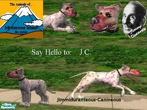 Sims 2 — Animals of Mysterious Island: J.C. by Small Town Sim — Jimmiduranteous-Canineous is the latest capture on