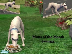 Sims 2 — Mutts of the Month: January by Small Town Sim — Meet Ary (air-e)the mutt for January. She (like all MOTM) is