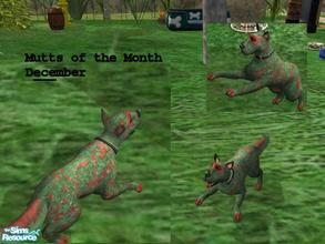 Sims 2 — Mutts of the Month by Small Town Sim — New Series (one a month). Meet Ece (ee-cee) the mutt for December. He